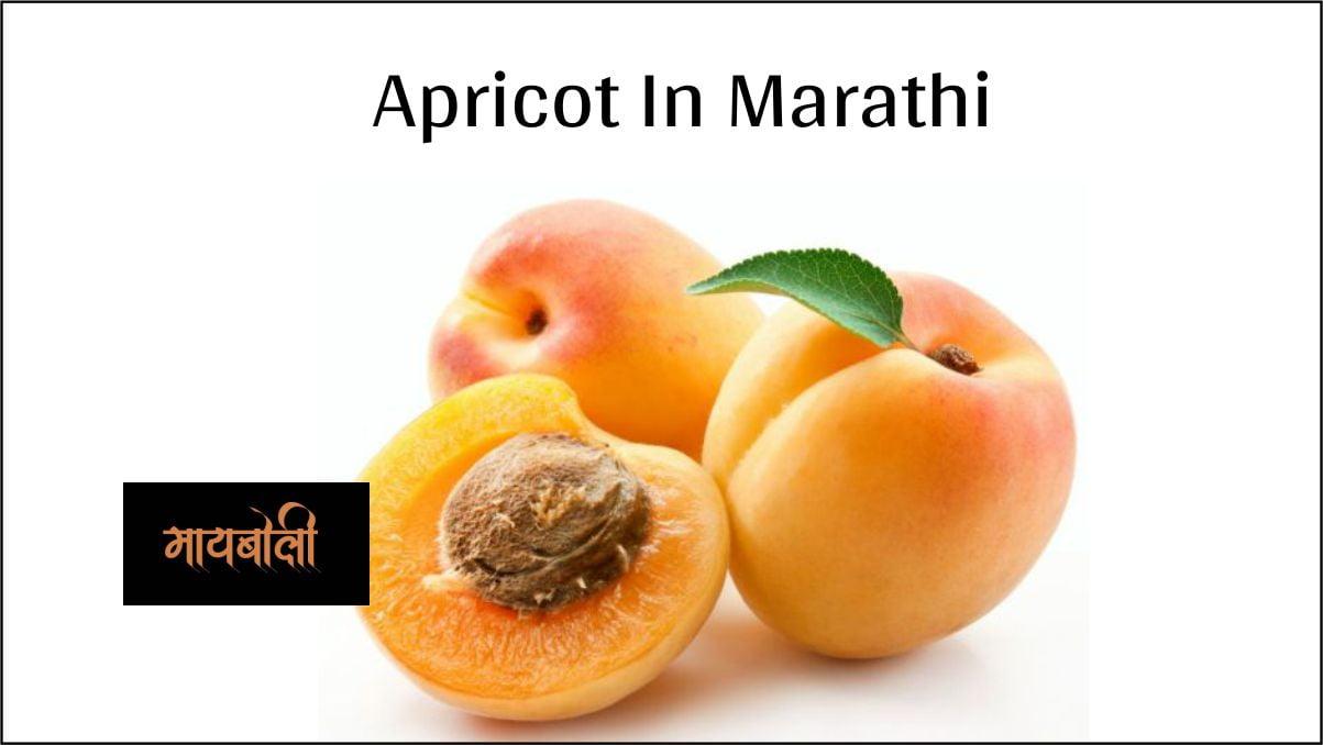apricot in marathi